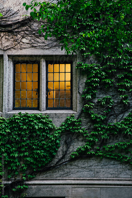 Illuminated Window and Ivy Wall by Anjali Pinto for Stocksy United