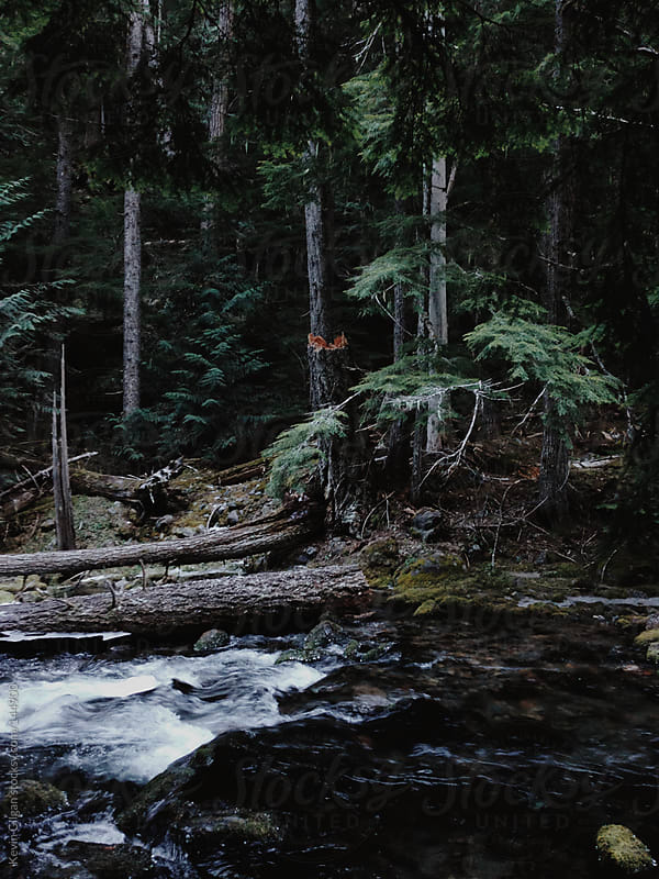 Stream in the Forest by Kevin Gilgan for Stocksy United