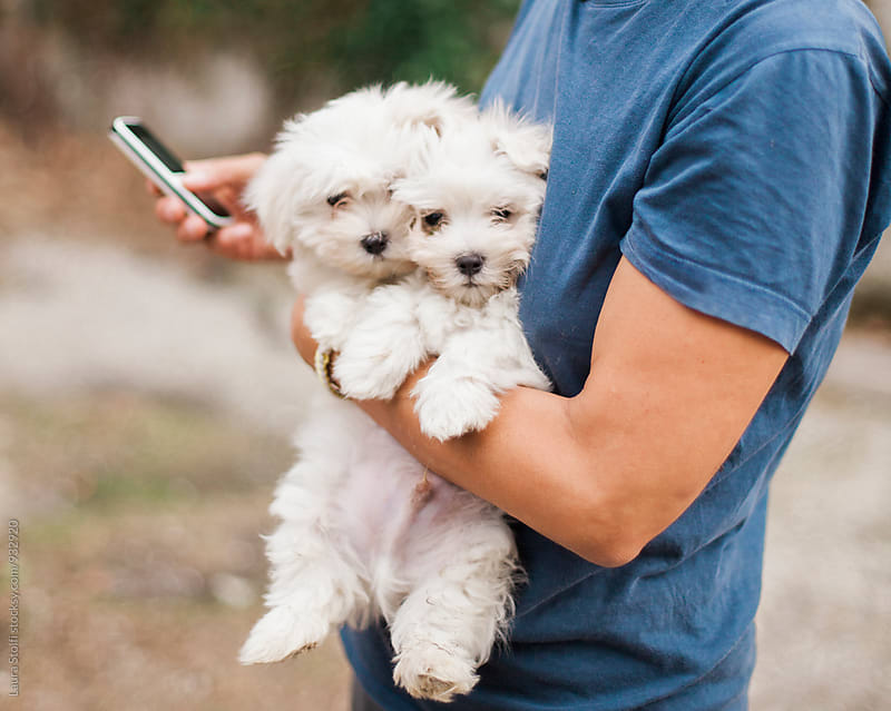 Close up of woman texting on the phone while holding two puppies in her arms by Laura Stolfi for Stocksy United