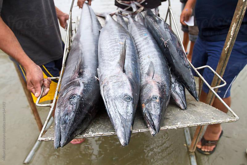 Ecuadorian artisanal commercial fishermen weighing their catch by Mihael Blikshteyn for Stocksy United
