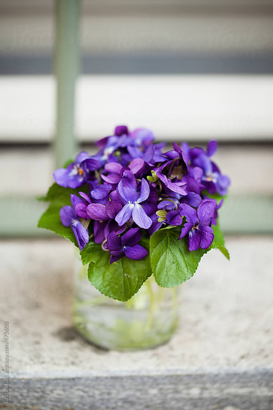 Wild violets bouquet in glass pot on windowsill by Laura Stolfi for Stocksy United