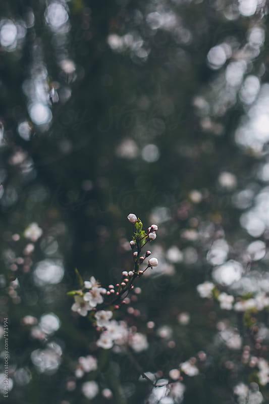 Spring by Evan Dalen for Stocksy United
