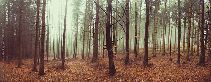 Wet forest at autumn by Robert Kohlhuber for Stocksy United