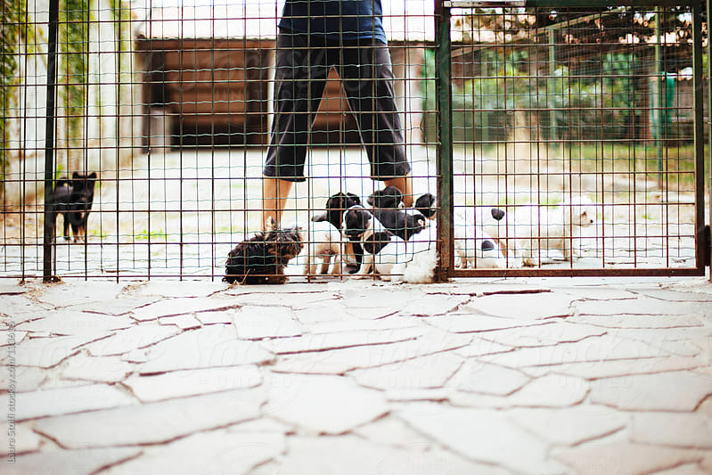 Woman stands behind a fence amongst lots of pure-breed puppies by Laura Stolfi for Stocksy United