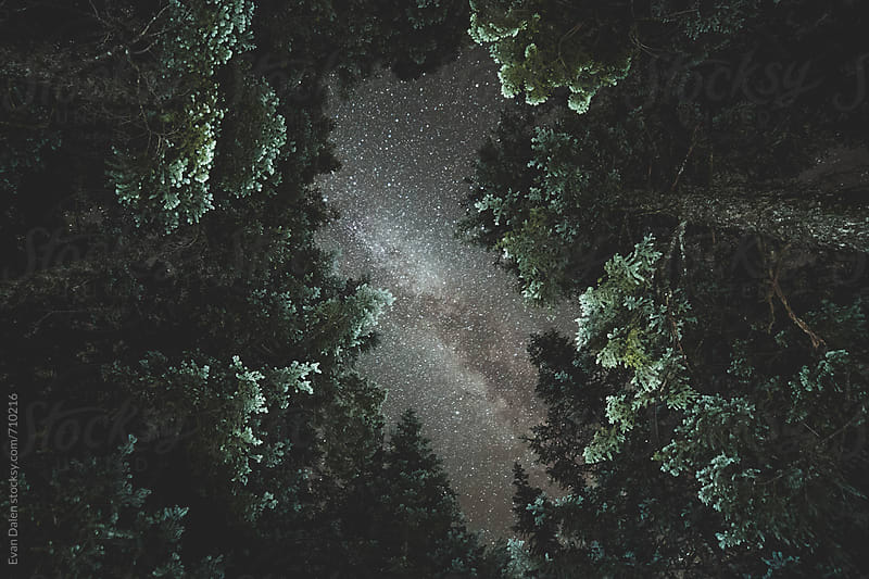 Milky Way Galaxy Above Dark Forest by Evan Dalen for Stocksy United