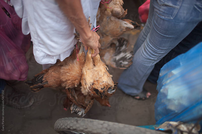 A woman carrying dead chickens at a market by Gary Parker for Stocksy United