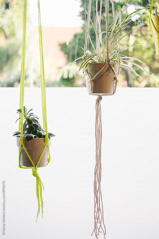 Plants Hanging in an Artist Studio by Kristine Weilert for Stocksy United