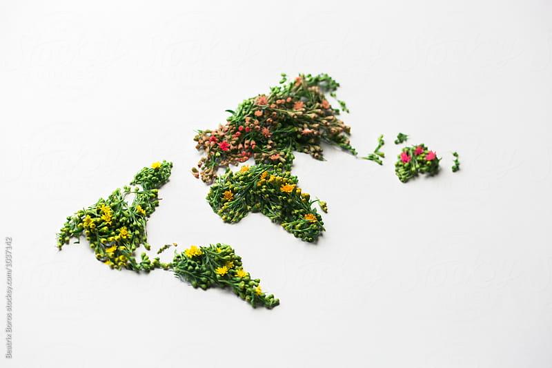 Oblique view of green continents with flowers on  white by Beatrix Boros for Stocksy United