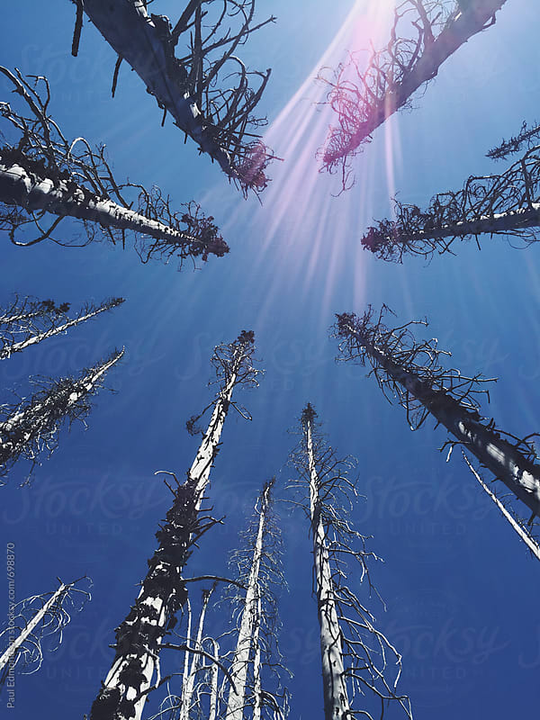 Remains of fire damaged trees in national forest by Paul Edmondson for Stocksy United