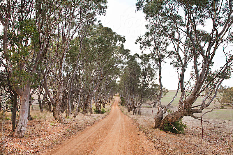 Red dirt roads in country Victoria by Natalie JEFFCOTT for Stocksy United