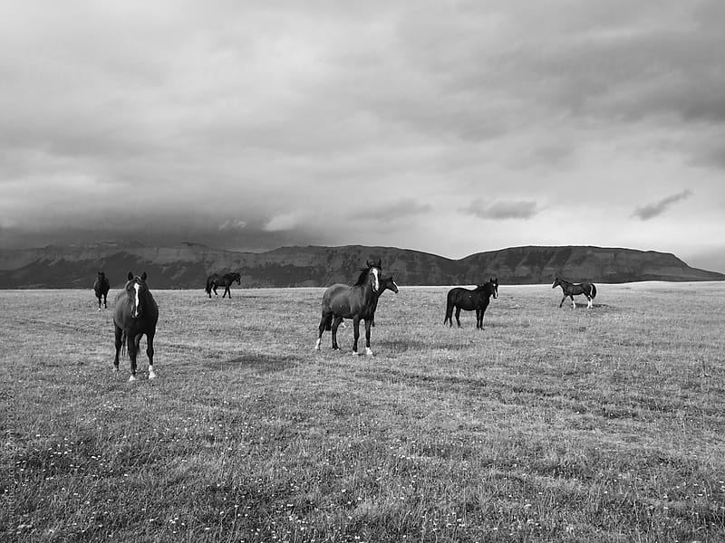 Horses on the Range by Kevin Russ for Stocksy United