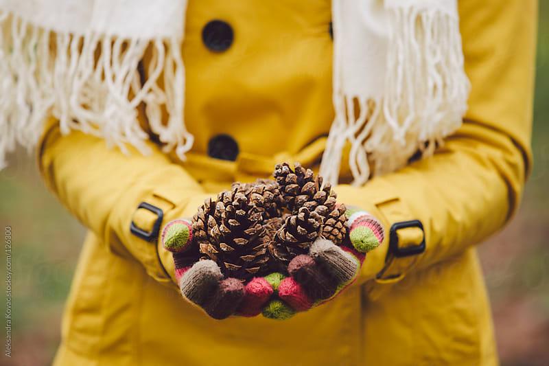Hands holding pine cone   by Aleksandra Kovac for Stocksy United
