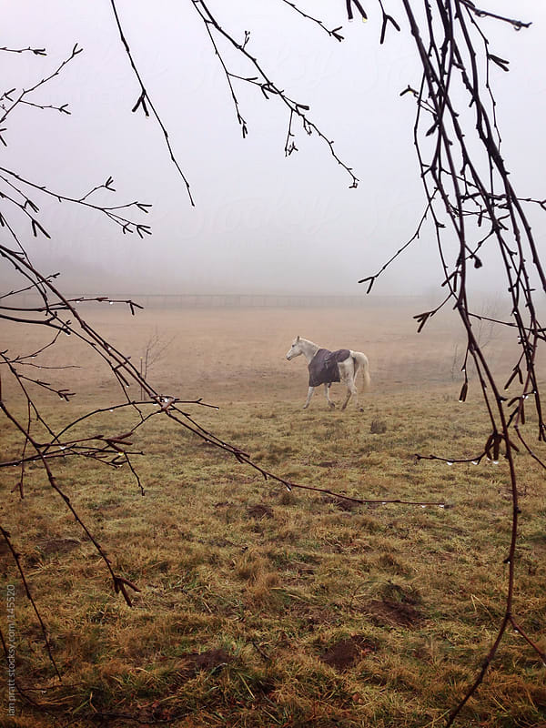 horse in fog through branches by ian pratt for Stocksy United