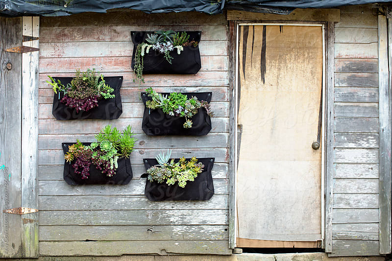 garden shed wall with vertical canvas planters containing succulents by Amy Covington for Stocksy United