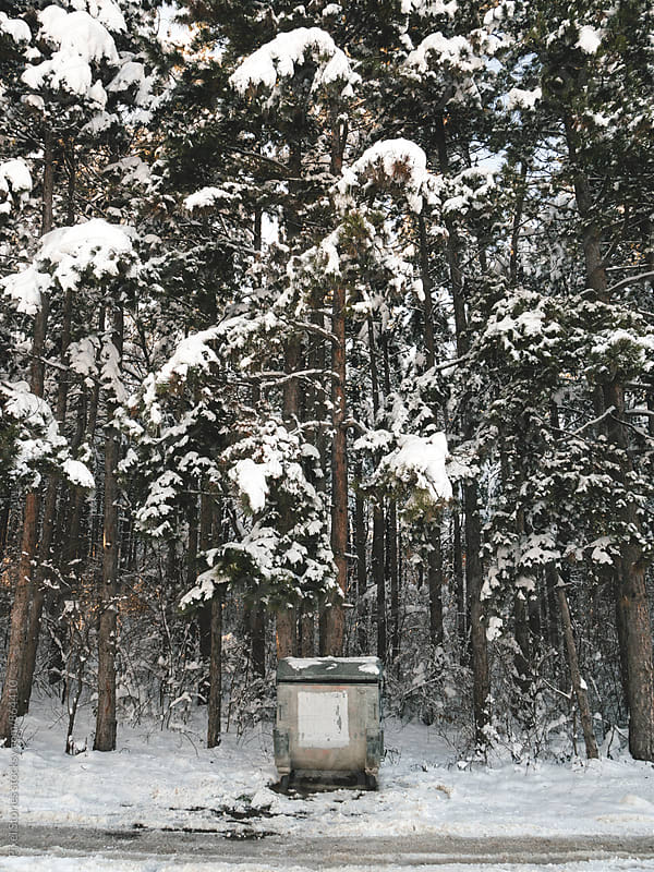 Trash bin against a snowy forest by Pixel Stories for Stocksy United