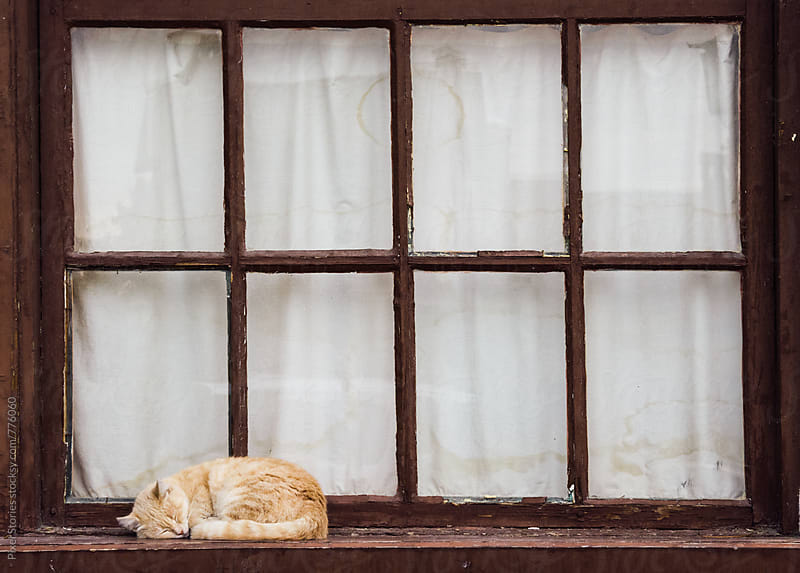 Cat sleeping on a window frame by Pixel Stories for Stocksy United