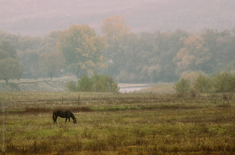 Horse on meadow in autumn by Cosma Andrei for Stocksy United