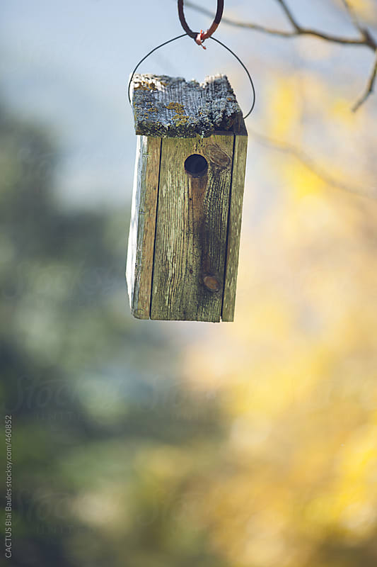 Bird house by CACTUS Blai Baules for Stocksy United