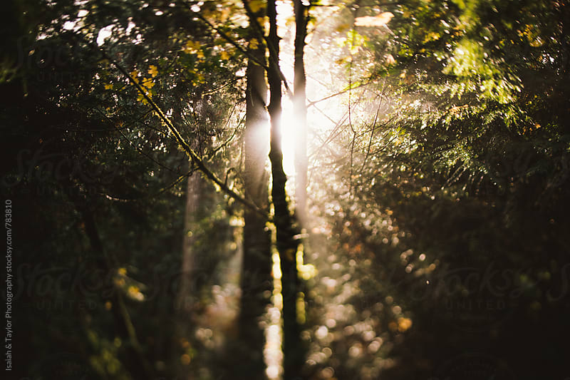 Morning sun through forest by Isaiah & Taylor Photography for Stocksy United