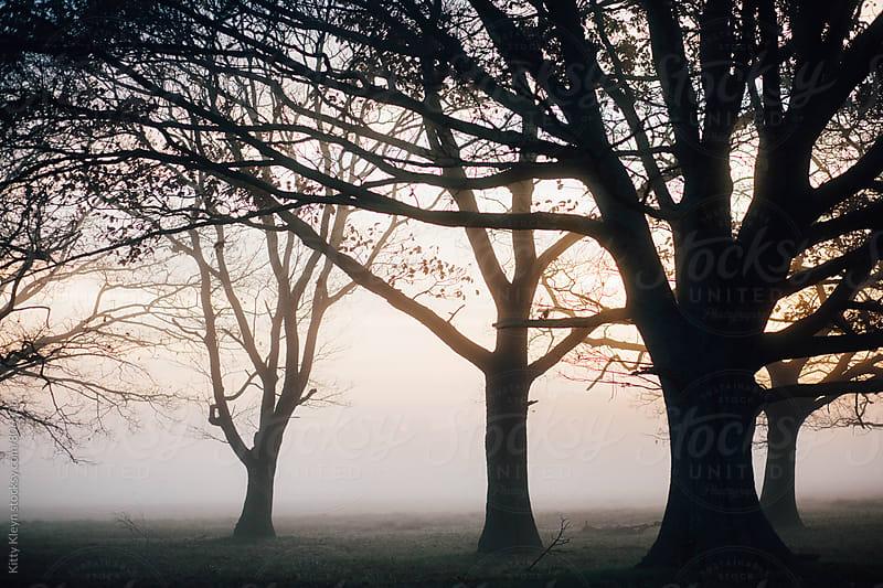 Misty woodland sunrise by Kitty Gallannaugh for Stocksy United