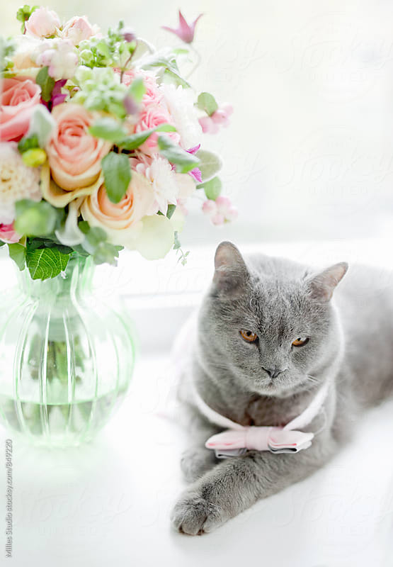 Cat and bouquet by Milles Studio for Stocksy United