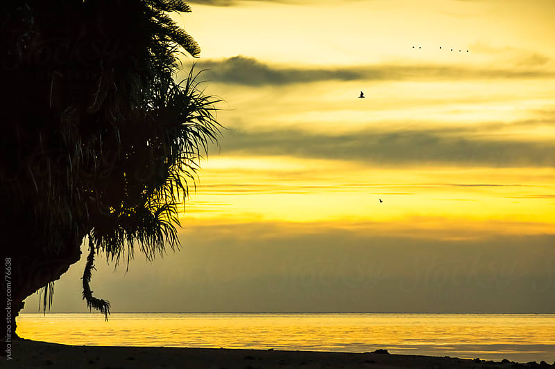 Silhouette of tropical beach at sunset by yuko hirao for Stocksy United