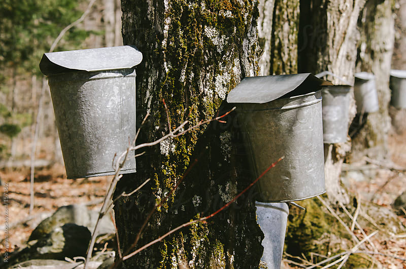 Maple Sugaring by Rob Sylvan for Stocksy United