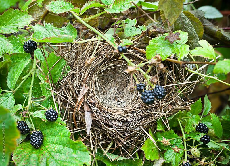Nest  by Jill Chen for Stocksy United