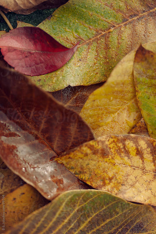 autumn leaves by B & J for Stocksy United