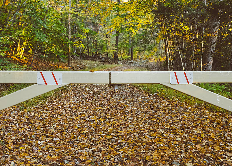 A beautiful forest path closed off with locked gate by kelli kim for Stocksy United