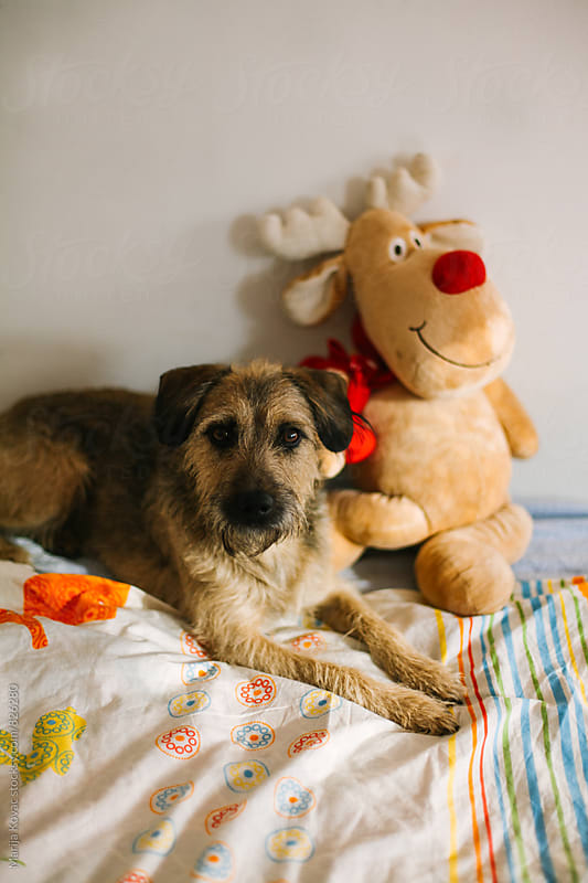 Cute dog lying with his reindeer toy - vertical by Marija Kovac for Stocksy United