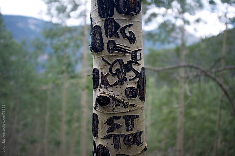 Words in Birch by Lucas Saugen for Stocksy United