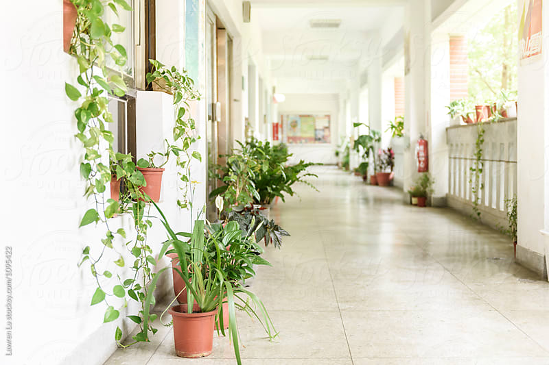 View on cozy hall with green plants by Lawren Lu for Stocksy United