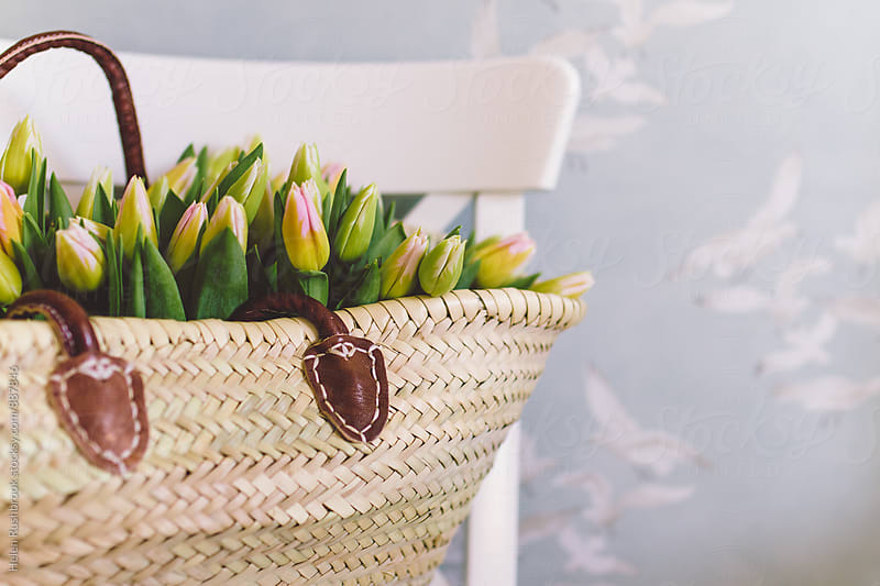 Tulips in a french market basket on a chair. by Helen Rushbrook for Stocksy United