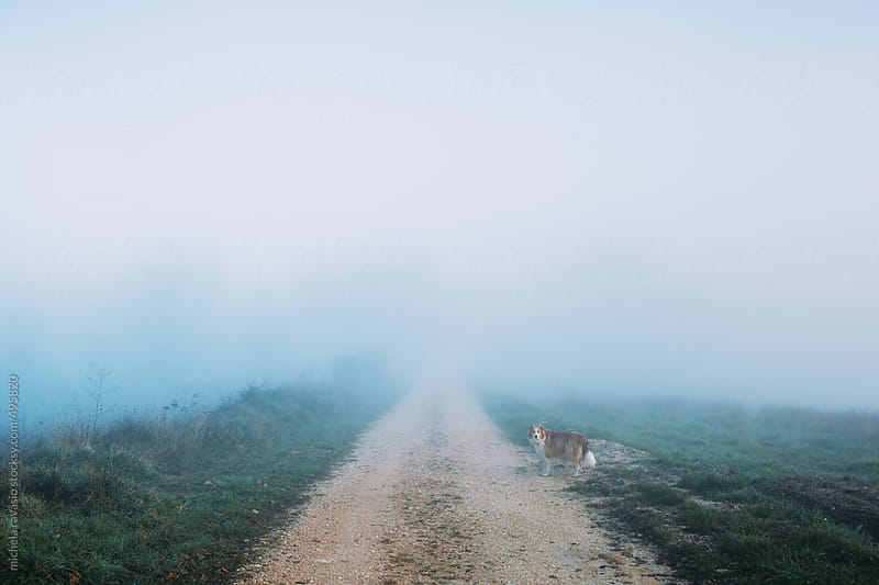 Dog on a country lane by michela ravasio for Stocksy United