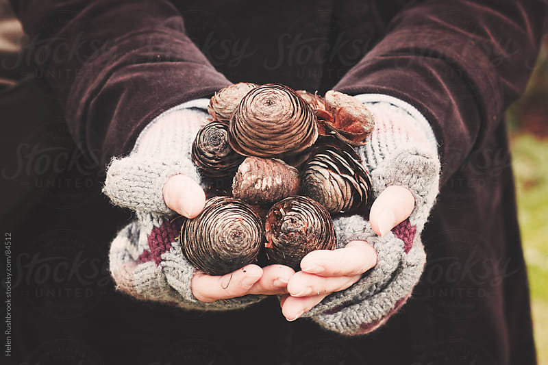 A woman's hands full of fir cones by Helen Rushbrook for Stocksy United