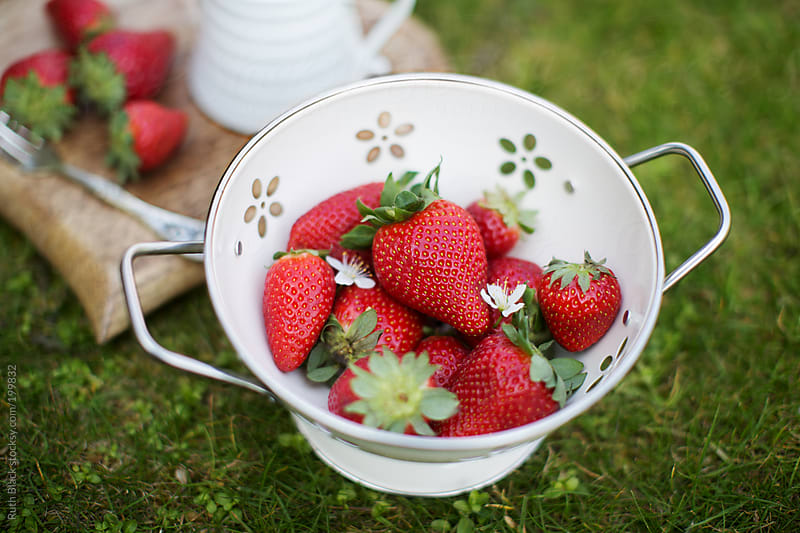 Freshly picked strawberries in a colander by Ruth Black for Stocksy United