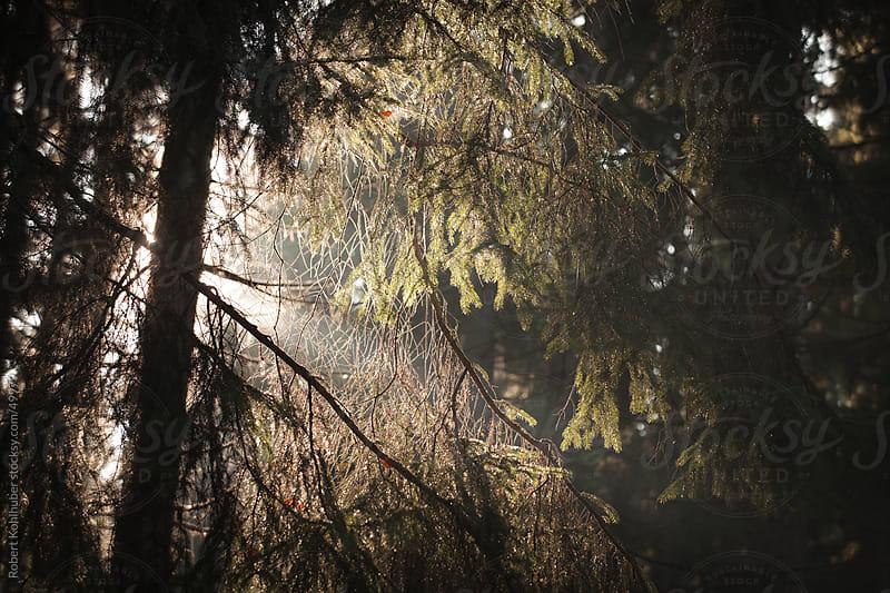 Sun rays in autumn forest by Robert Kohlhuber for Stocksy United