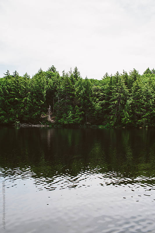 Pine Trees Reflected on Water by Anjali Pinto for Stocksy United