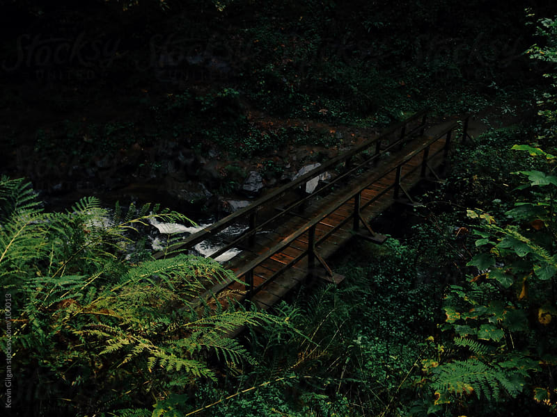 Bridge in forest by Kevin Gilgan for Stocksy United