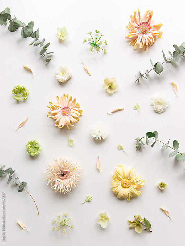 Deconstructed Flowers by Sophia Hsin for Stocksy United