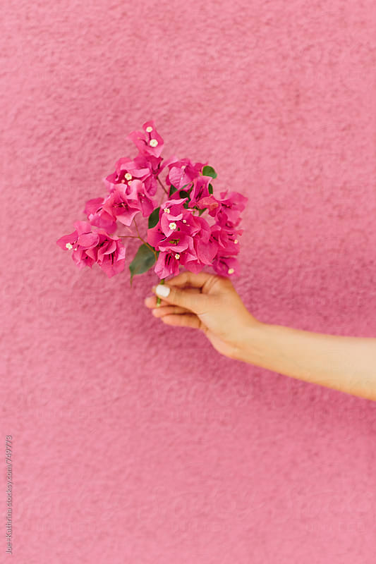 bougainvillea camouflage by Joe+Kathrina for Stocksy United