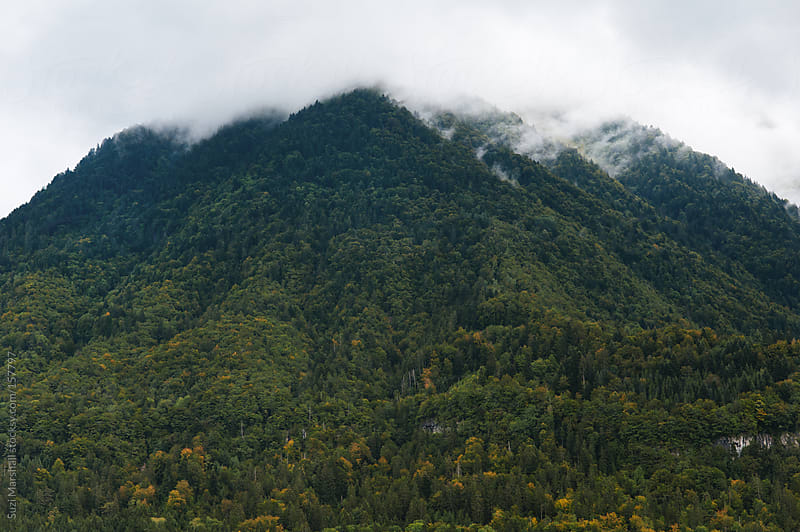 Tree clad mountain shrouded in low cloud by Suzi Marshall for Stocksy United