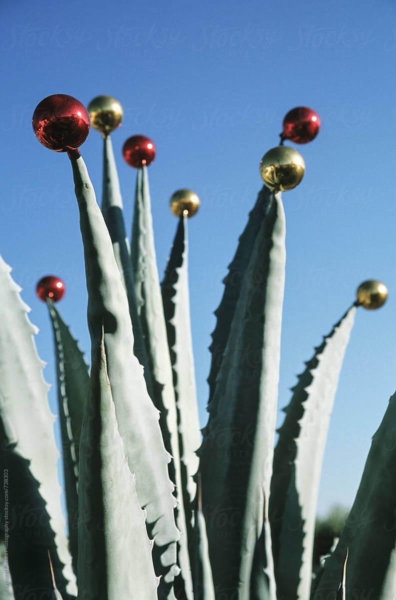 christmas tree ornament on cactus by raymond forbes llc for stocksy united