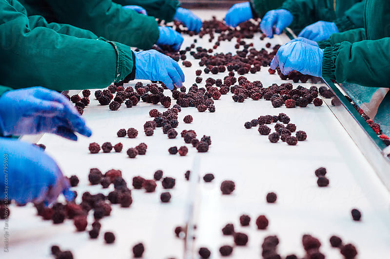 Process of producing frozen fruits. Work on assembly line. by Dimitrije Tanaskovic for Stocksy United