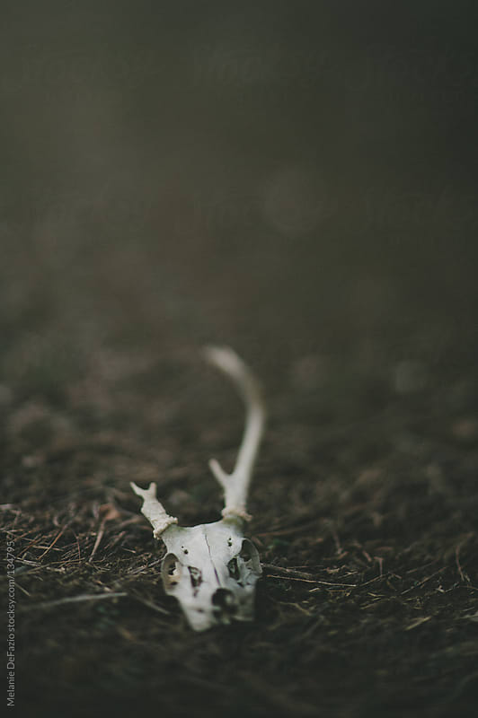 Skull by Melanie DeFazio for Stocksy United