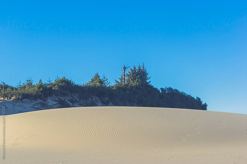 Sand dune and pines by Richard Brown for Stocksy United