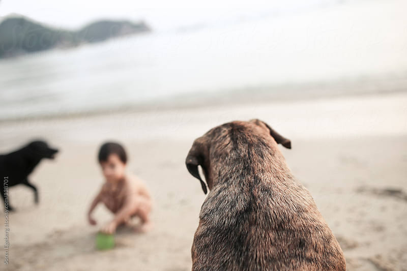 Back view of dog loooking at toddler playing in the sand on the beach by Soren Egeberg for Stocksy United