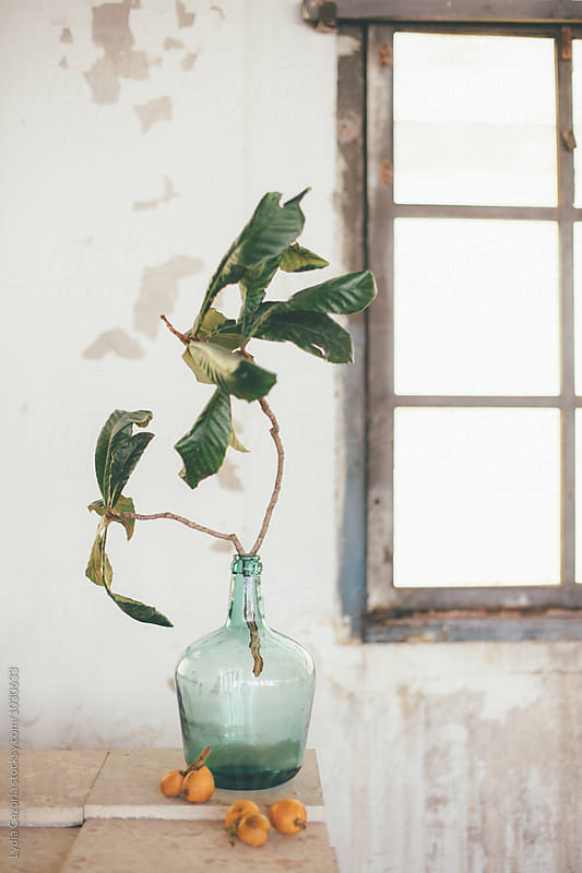 Medlar and a demijohn with a plant  in a vintage dream space by Lydia Cazorla for Stocksy United