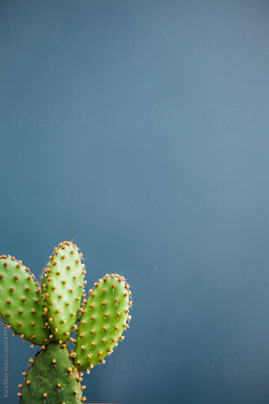 Cactus against blue wall by Kara Riley for Stocksy United